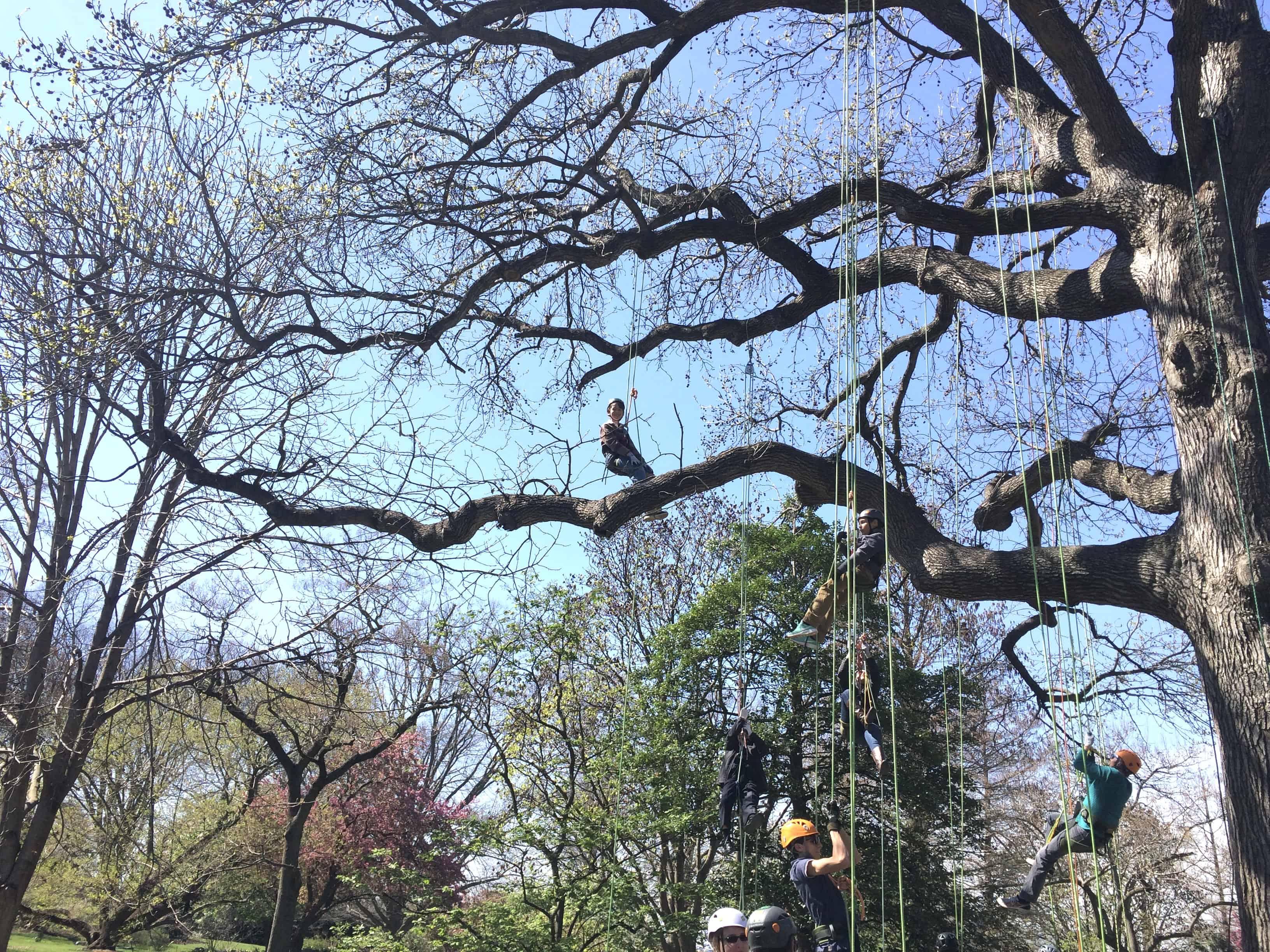 Canopy Climb, Botanical Gardens, MO, family fun in Saint Louis